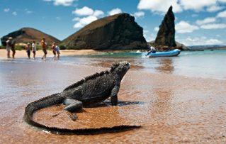 Lo que Debes Saber para Visitar las Islas Galápagos Ecuador Satisfactoriamente